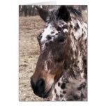 Appaloosa Stallions Greeting Card