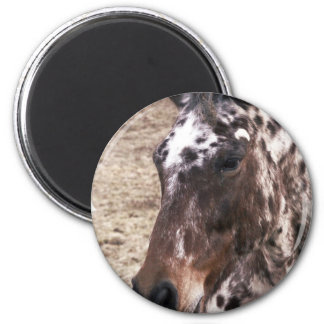 Appaloosa Stallions Magnet Refrigerator Magnet
