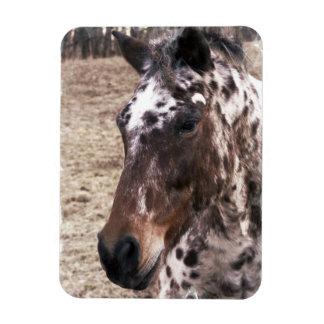 Appaloosa Stallions Premium Magnet Rectangle Magnets