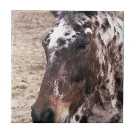 Appaloosa Stallions Tile