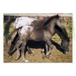 Appalosa mare & foal greeting card