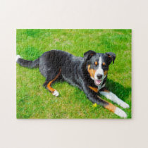 Appenzell Mountain Dogs. Jigsaw Puzzle