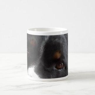 Appenzeller Sennenhund eyes.jpg Taza De Café