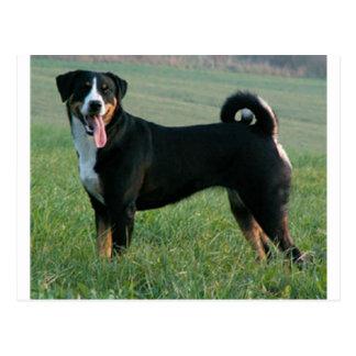 Appenzeller Sennenhund full.png Tarjeta Postal