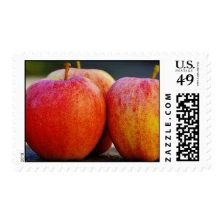 apple apples fruit food vine custom personalize stamps