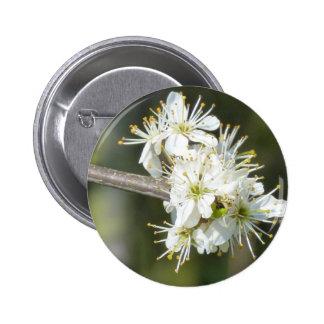 Apple blanco florece las flores pin redondo 5 cm