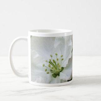 Apple blanco florece primer taza