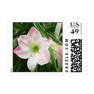 Apple Blossom Amaryllis Postage Stamp