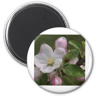 apple blossom and a lady bug magnet