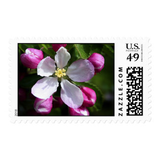 Apple Blossom and Buds Postage Stamp