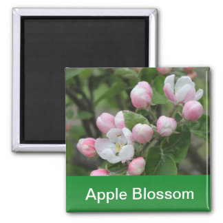 apple blossom and green leaves 2 inch square magnet