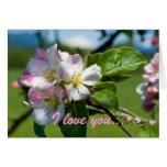 Apple Blossom Anniversary Card