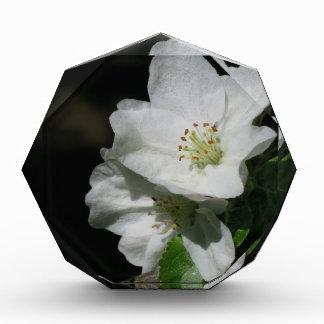 Apple blossom award
