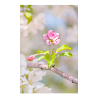 Apple blossom - Beauty Flyer