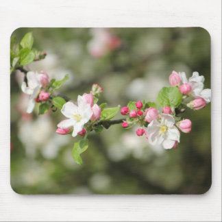 Apple Blossom Branch Mouse Pad
