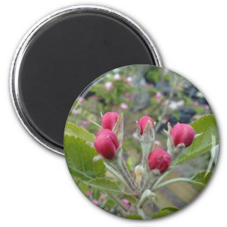 Apple Blossom Buds 2 Inch Round Magnet