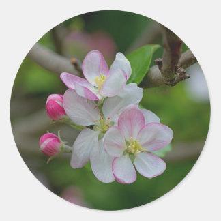 Apple Blossom Classic Round Sticker