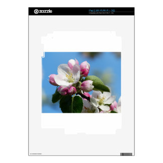 Apple Blossom Closeup iPad 2 Decal