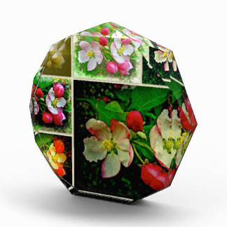Apple Blossom Collage - Enhanced Digital Photo Acrylic Award