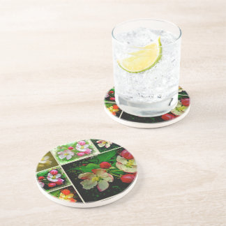 Apple Blossom Collage - Enhanced Digital Photo Drink Coaster