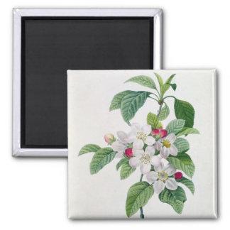 Apple Blossom, from 'Les Choix des Plus Belles 2 Inch Square Magnet