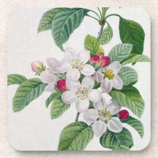Apple Blossom, from 'Les Choix des Plus Belles Beverage Coasters