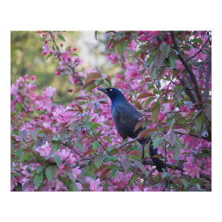 Apple Blossom Grackle Print