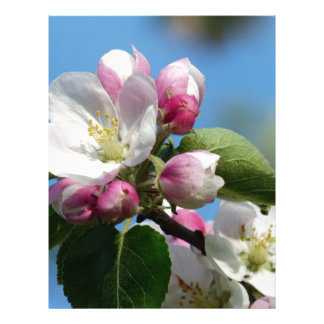 Apple blossom in Spring Letterhead
