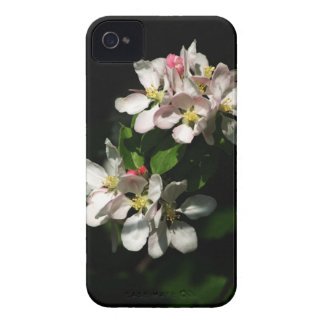 Apple Blossom iPhone 4 Cover