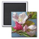 """""""Apple Blossom"""" Magnet"""