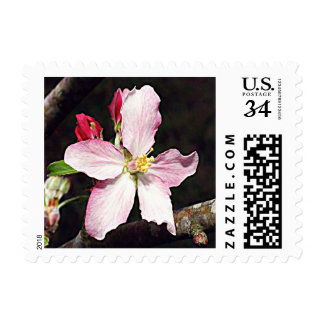 Apple Blossom (Michigan) Postage Stamp