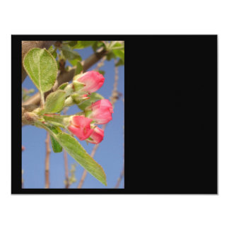Apple Blossom Newbie 4.25x5.5 Paper Invitation Card
