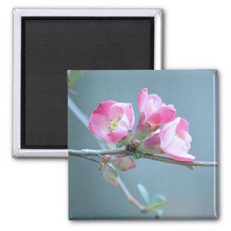 Apple Blossom #P0358 Magnet