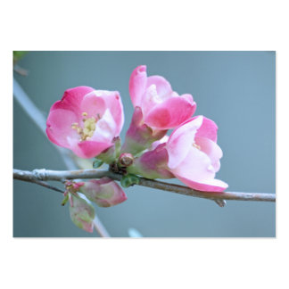 Apple Blossom #P0358 Mini Print Business Cards