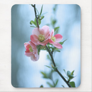 Apple Blossom #P0365 Mousepad