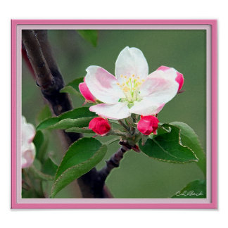 Apple Blossom Poster; Watercolor Impressionistic Poster