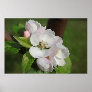 Apple Blossom Print 2
