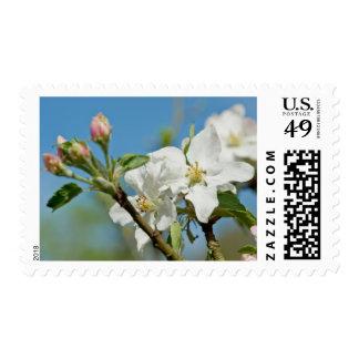 Apple Blossom Stamp