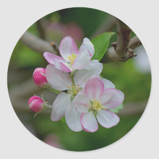 Apple Blossom Round Stickers