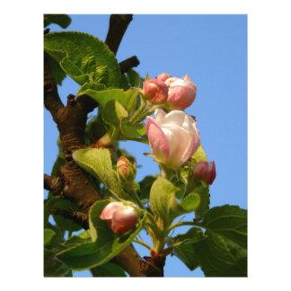 Apple blossom still closed letterhead