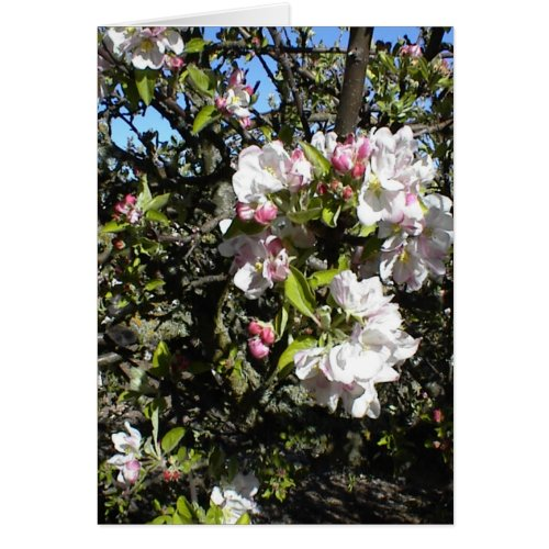 Apple Blossom Time Card