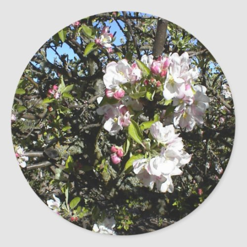 Apple Blossom Time Classic Round Sticker
