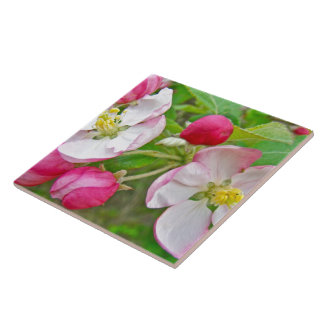 Apple Blossom Time Tile