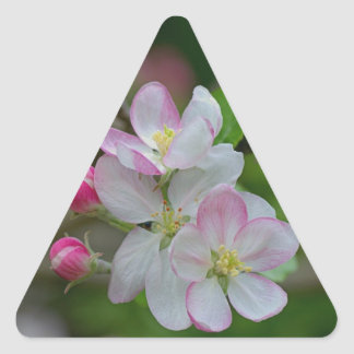 Apple Blossom Triangle Sticker