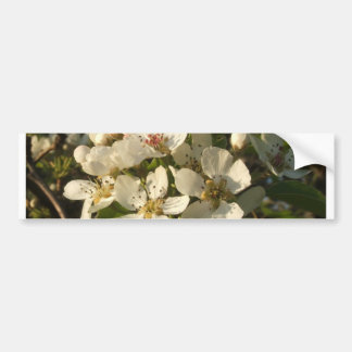 Apple Blossom White Bumper Sticker