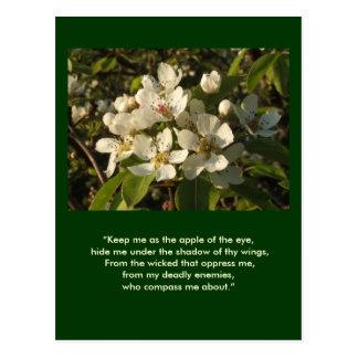 Apple Blossom White Postcard