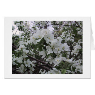 Apple Blossoms 2003 Card