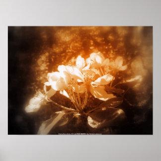 apple blossoms #3, bronze splash posters