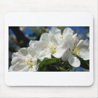 apple blossoms a springtime special mouse pad