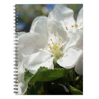 apple blossoms a springtime special notebook